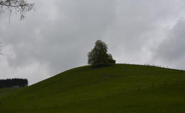 Waldluftrunde